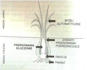 Cebulograf. A.Popiel, E.Pragłowska